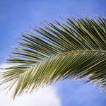 Palm Trees Nursery Growers
