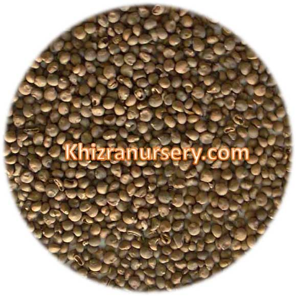 Ceiba Speciosa Seeds