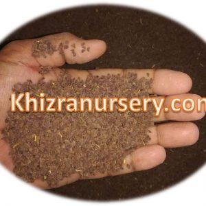 Peganum harmala syrian rue seeds